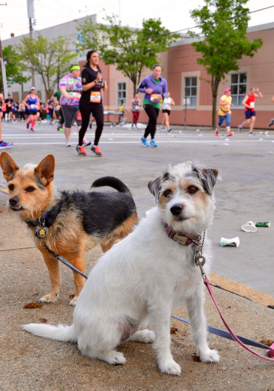 Charlie and Penny didn't realize they'd come upon a sea of runners during their morning walk. / Image: Leah Zipperstein, Cincinnati Refined / Publsihed: 5.7.18