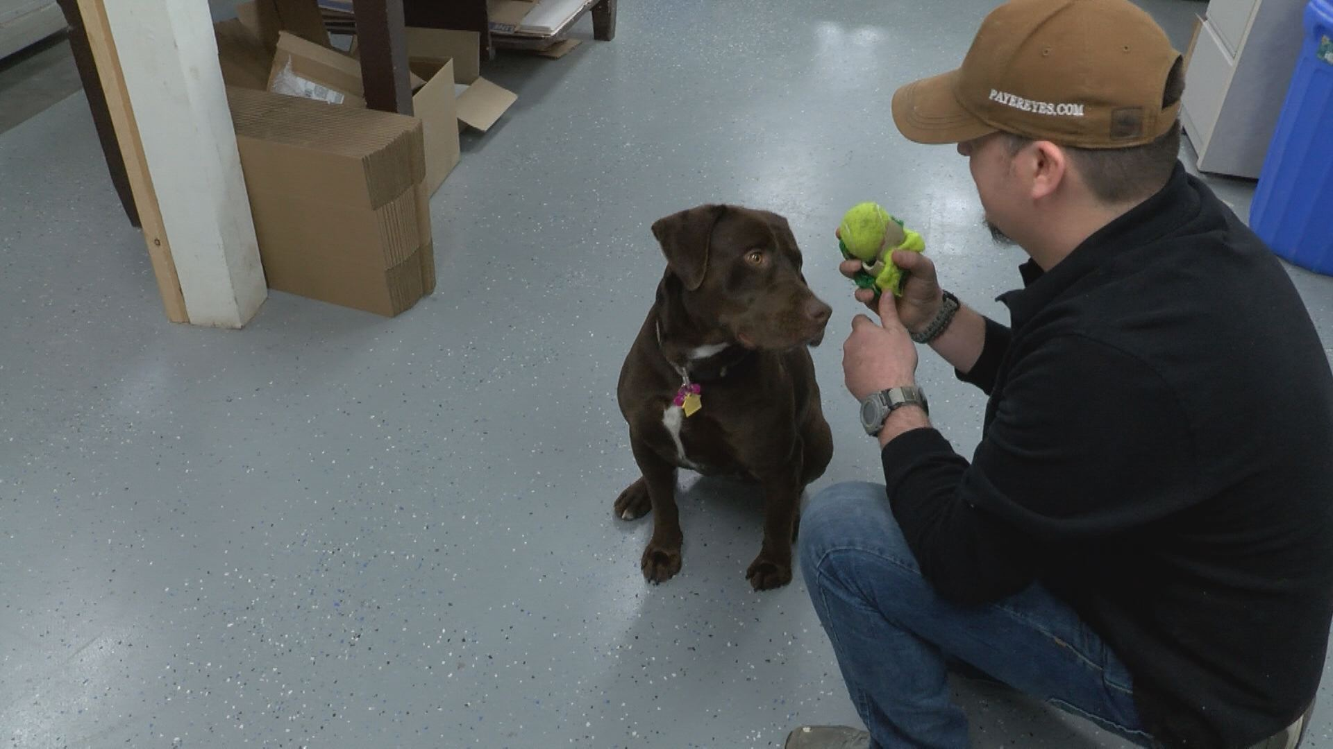 Rosie plays with her owner, Poe Noonkester, at his workplace in Abingdon. (Thomas Gray/WCYB)