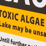 Several Thurston Co. lakes under advisory due to algae blooms
