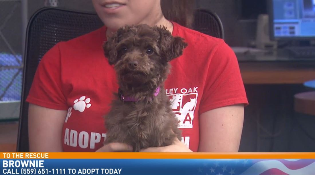 Abby Dean with Valley Oak SPCA visited with a puppy looking for a good home