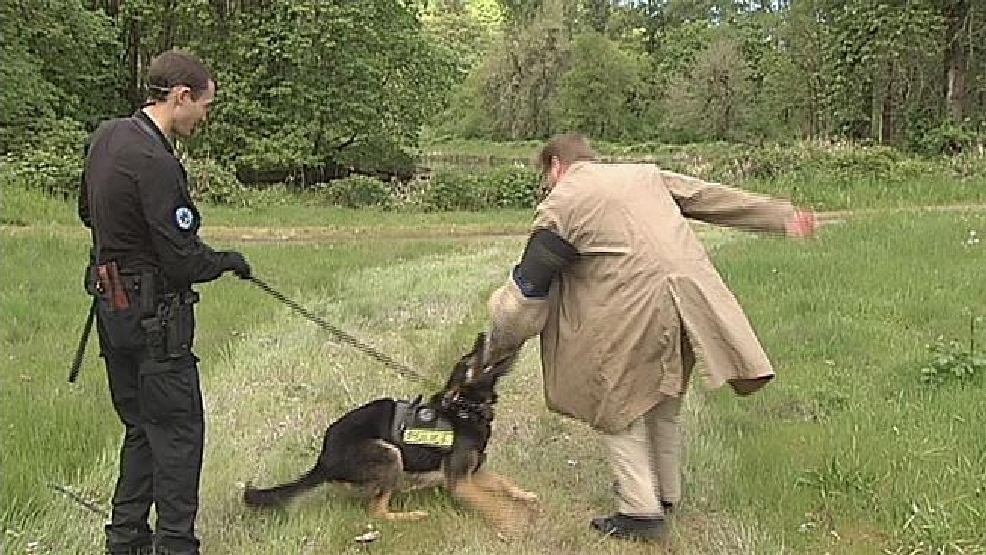 Police dogs practice taking a bite out