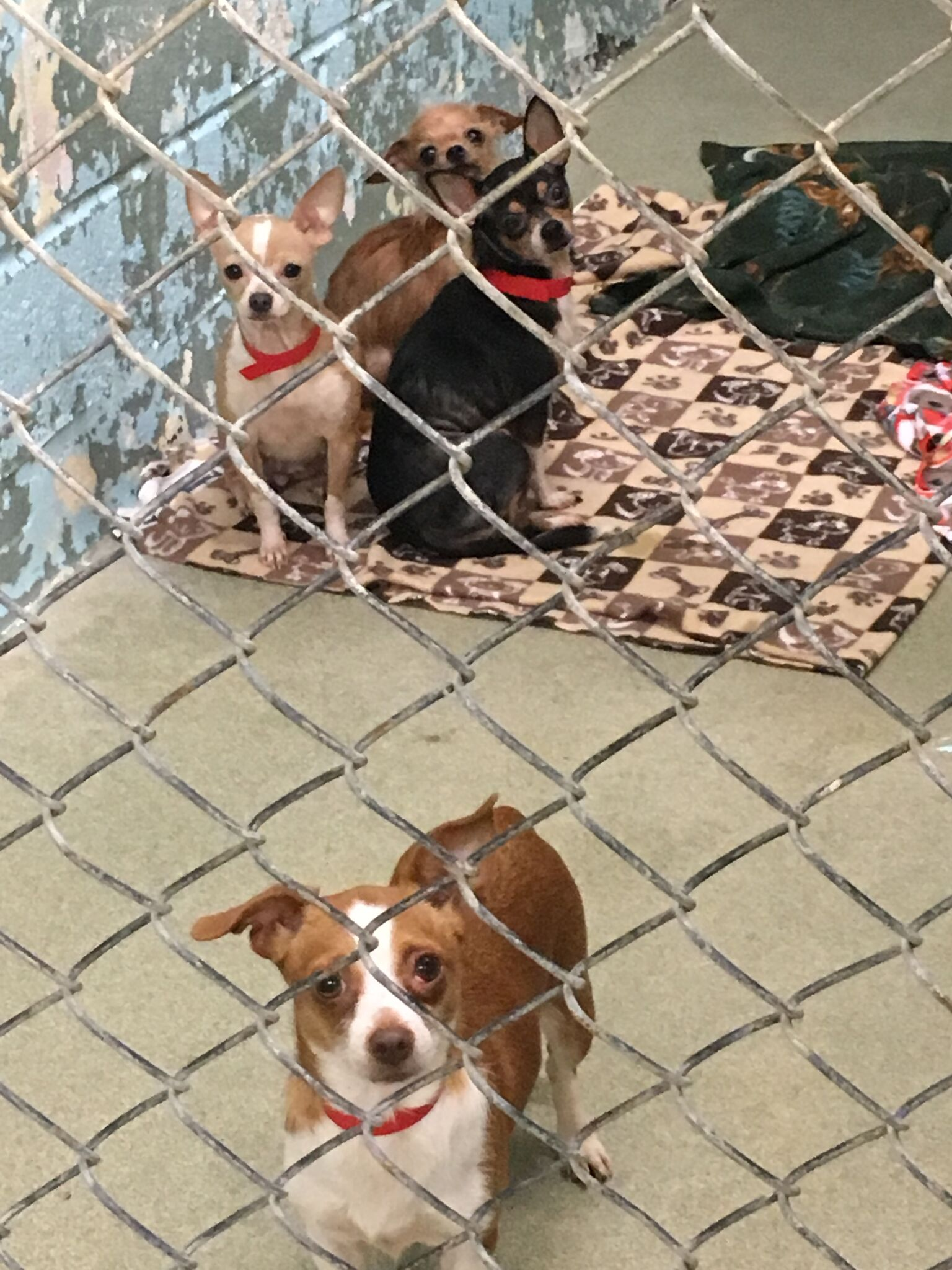 98 small dogs released to Greenhill Humane Society