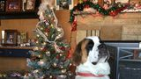 [GALLERY] Festive pets waiting for Santa Paws