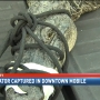 Crowds watch as alligator is captured in Mobile