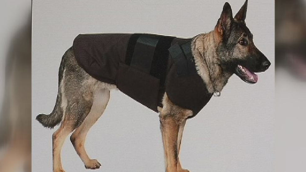 Ballistic vests for police dogs come with pros and cons kboi for Ballistic dog