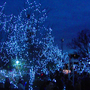 Festival of Lights opens at the Cincinnati Zoo