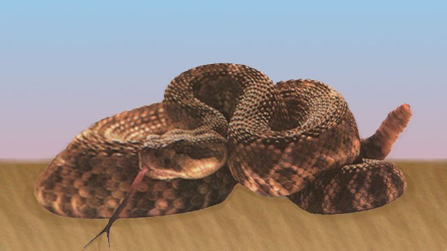 Rattlesnakes are a group of venomous snakes (Photo: MGN Online)