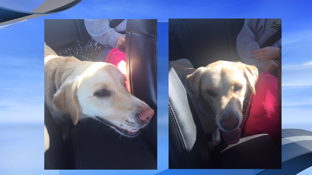 A dog named Cooper who went missing after a police chase on I-95 in Florence County Tuesday evening has been found, according to the dog's owners. (Viewer submitted)