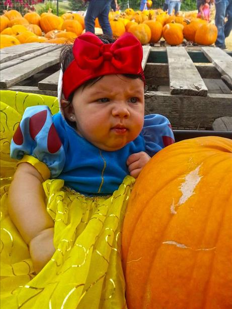 <a  href=&quot;http://share.valleycentral.com/media/4481095&quot;>First Pumpkin</a>