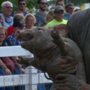 "Is ""Catch-A-Pig Contest"" at Wood County Fair animal abuse?"