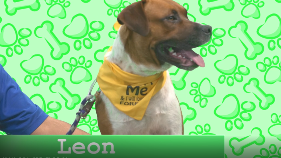leon screen grab.PNG