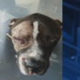 Rescuers are searching for owners of the dog they found shot in the head