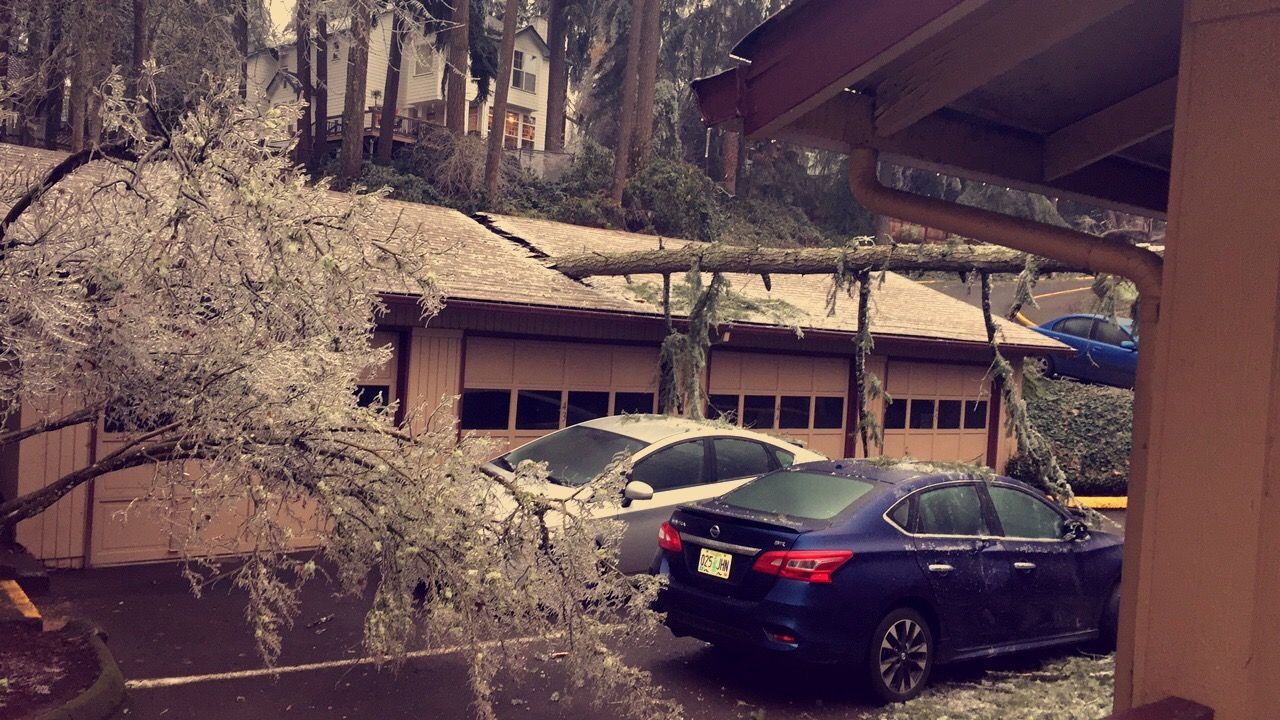 Nicholas Stewart photo of tree down into garage in Propsect Parks off Chambers Street December 15, 2016.