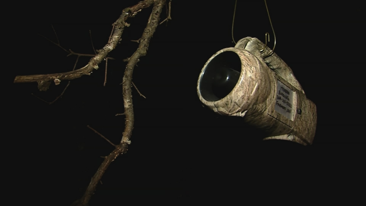 An electronic call is used to attract the Saw Whet Owls to the net. (WCHS/WVAH)